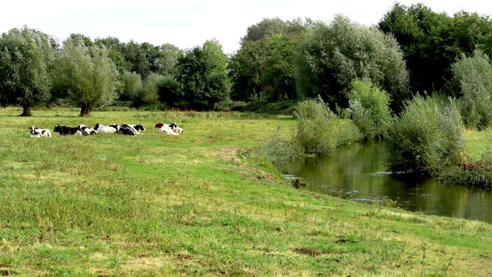 wandeltoure Heeze  langs de Aa  met een kudde rustende schapen