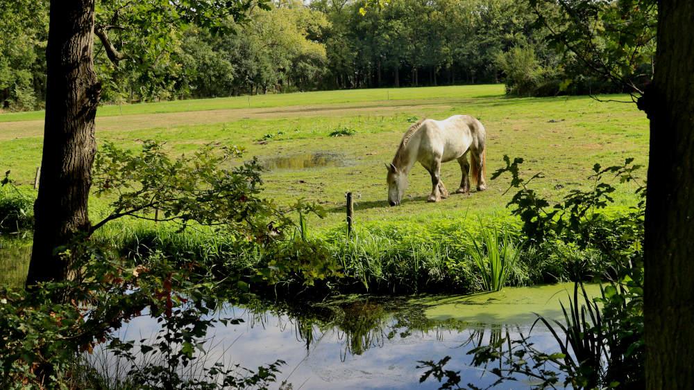 paard op grasland bij de Trage Tocht Heeswijk