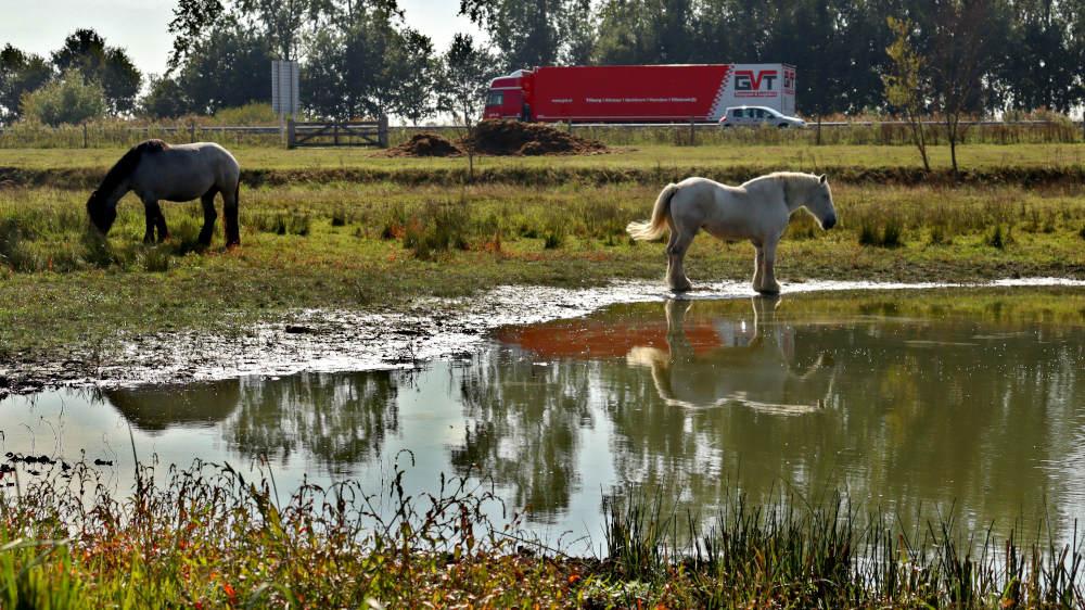 paarden staan mooi te wezen, maar de snelweg verstoort het plaatje wel langs de wanderoute vanuit Heeswijk.