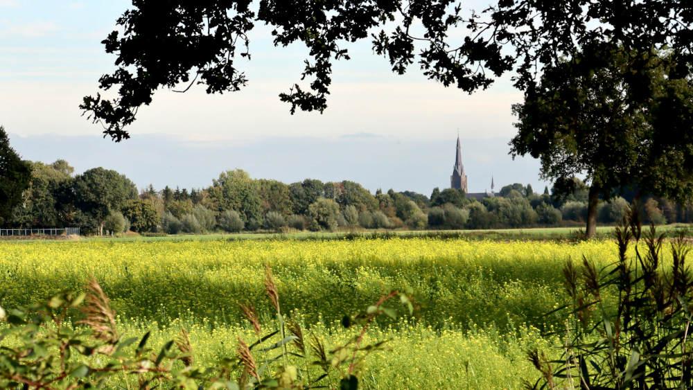 De wandeleoute eindigt in Heeswijk, waarvan je als eerste de kerk weer ziet.