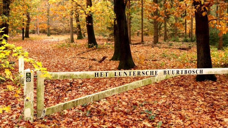 Het Luntersche Buurtbosch bij het Middelpunt van Nederland