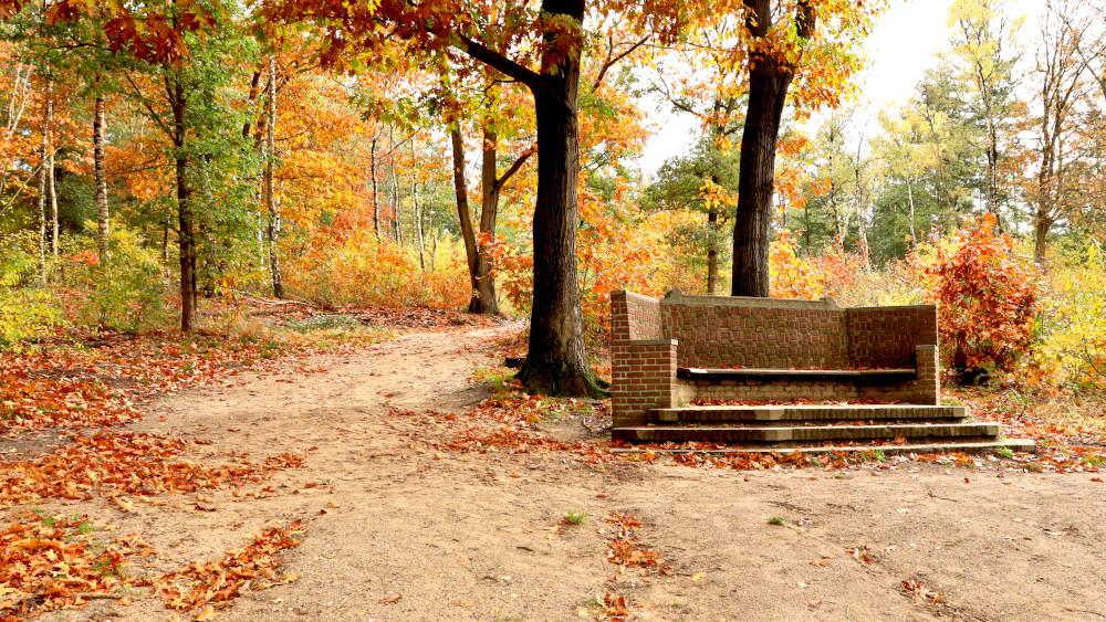 Notarisbank tussen de herfstbomen