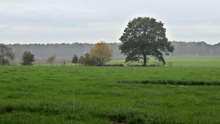 Weiland met wat optrekkende mist na een regenbui, vanaf een klompenpad;