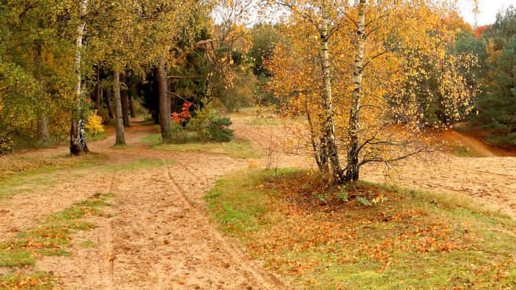 Klompenpad Meulunterenpad voert ook over zandverstuivingen