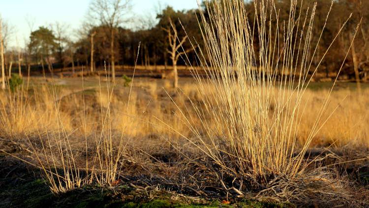 Trage Tocht Groote Peel op de grens met Brabant