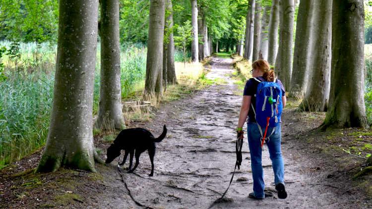 Paadje achter Kasteel 't Nijenhuis langs  tijdens de wandeling vanuit Heino
