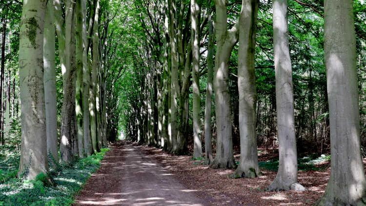 statige rijen bomen in de Sallandse landerijen