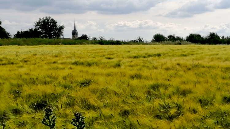 Wandelen langs een korenveld met de kerk van Schimmert op de achtergrond