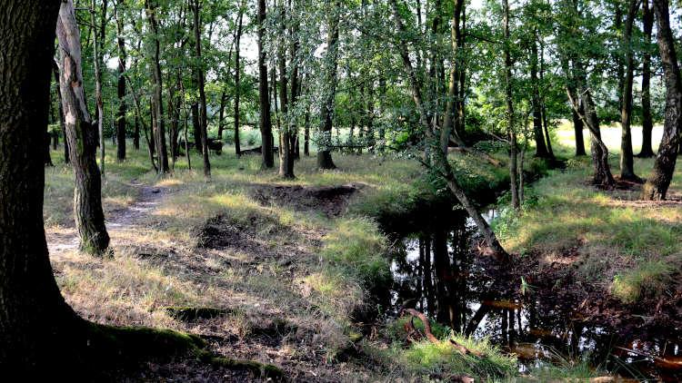 Esperloop tijdens de Trage Tocht, het mooiste wandelpad langs een beek in Brabant