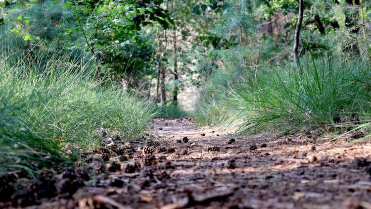 Brabants bos bij de Trage Tocht de Mortel