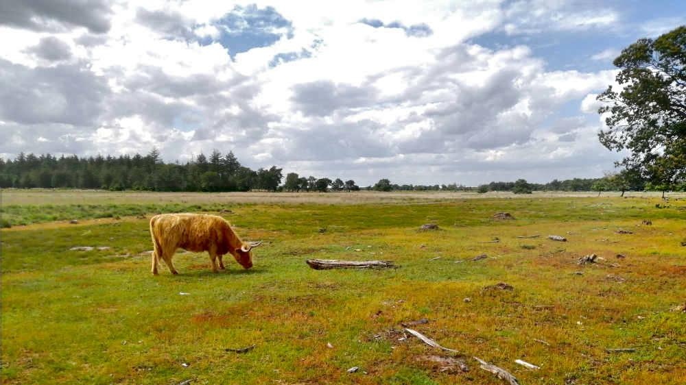 Trage Tochten in Brabant/ de heidevelden bij Heeze