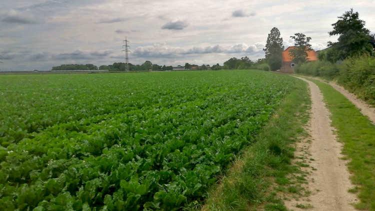 Tussen de Geleenbeek en de Geul wandel je lange tijd langs akkervelden
