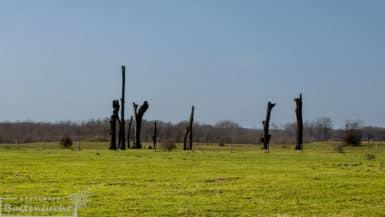 woodhenge aan de maas in Meers