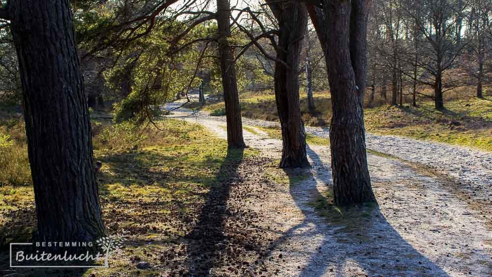 Idyllisch paadje met bomen op de Brunsummerheide