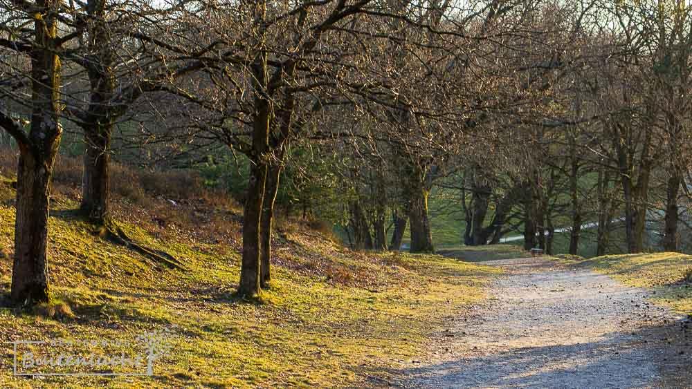 Bomen langs het pad tijdens de trage tocht Brunsummerheide