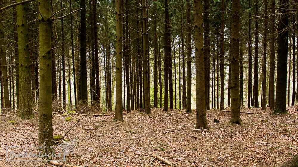 glooiende bossen in Zuid-Limburg,  te zien vanaf het rolstoelpad