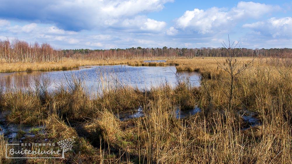 woest moerasgebied WIjfelterbroek