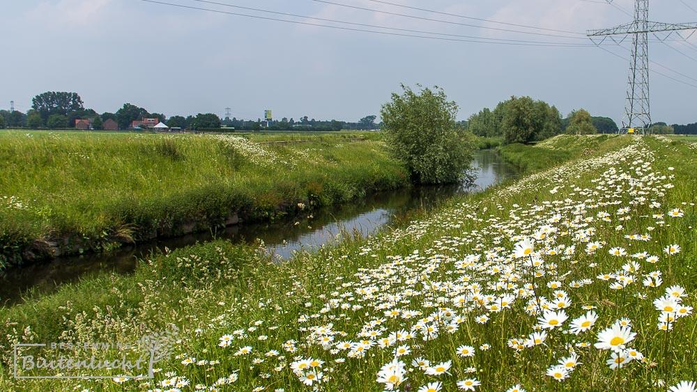 Bloemenpracht bij de Vloedgraaf tussen Susteren en Maaseik